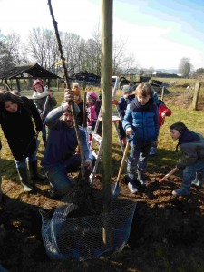 plantation fruitiers école
